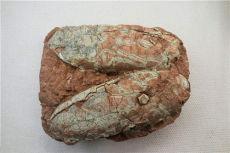 蛋化石交易要去哪里好