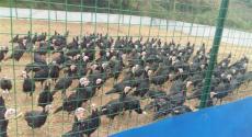 养鸭用绿色铁丝网-厂-厂家