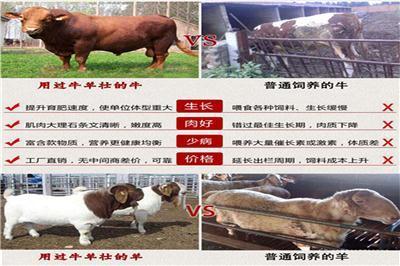 解决牛羊催肥长肉速度河南普奥生物在线咨询牛羊催肥