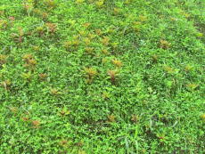 喷播植草单价 北京边坡绿化河南景绣绘远