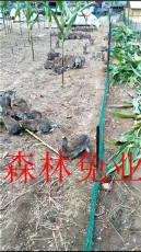 雜交野兔養殖技術與養殖方法