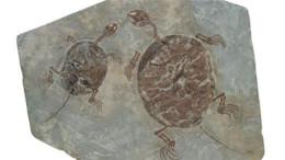 古生物化石哪里收购能卖高价