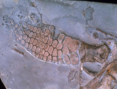鱼龙化石的交易记录表格