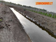 濟源哪里賣泥鰍池薄膜/低價供應黃鱔養殖膜