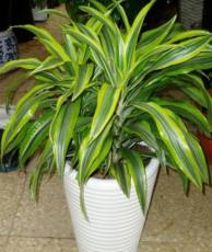 綠植租賃-植物租擺-常州綠化養護公司