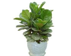 常州办公绿植租摆-盆栽花卉植物租赁养护