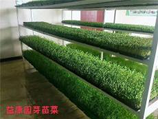 益康园无土栽培 物理和生物促生 技术行业领