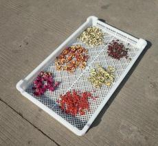 塑料单冻器塑料晾晒烘干盘