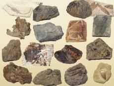 哪家公司交易古化石