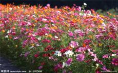 北京花卉租赁公司花卉租摆
