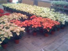 北京花卉出租公司