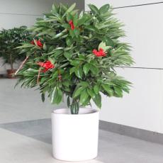 北京花卉销售公司北京花卉销售
