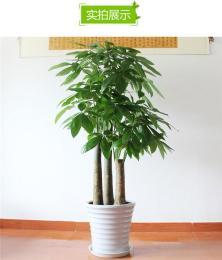 绿植销售北京绿植租赁北京绿植销售公司