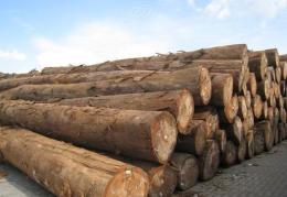 天津港首次进口杉木需要哪些证件