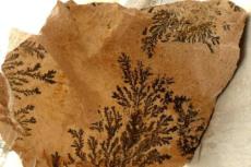 植物化石的特点是什么