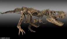 恐龙化石的收购的价格是多少