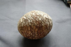 今年蛋形奇石价格是多少