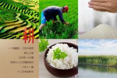 天下稻王品牌堿地米高級商務禮品招商