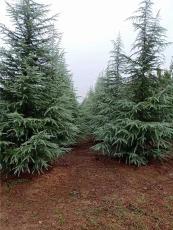 陕西西安千亩绿化苗木基地品种齐全价格低