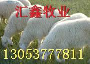 选种养牛繁殖