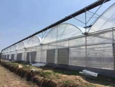 貴貴溫室連棟薄膜日光溫室工程設計施工與建