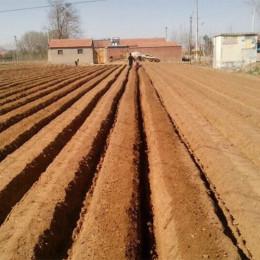 苗圃开沟培土机 大棚草莓开沟起垄机