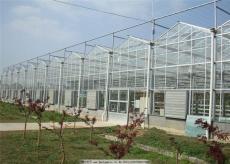 甘肅酒泉田園休閑綜合玻璃溫室陽光房承建商
