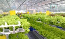 甘肃金昌有机蔬菜玻璃温室大棚9000平方报价