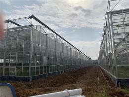 浙江杭州蔬菜种植玻璃温室大棚8000平方方案