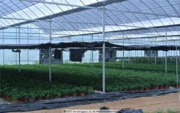 浙江衢州连栋薄膜型育苗大棚温室3米高价格