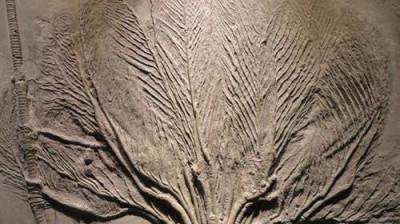 有实力收购古生物化石的公司