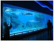 广州海鲜池定做厂家 大型亚克力鱼缸订做