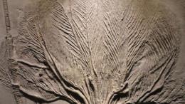 古生物化石哪里可以上门收购转让