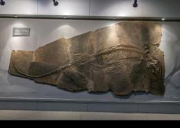 鱼龙化石在哪家公司权威