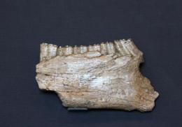 骨化石上门收购价格走势