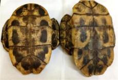 龟板化石有多少高价拍卖的