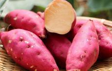 西瓜红红薯 广东西瓜红红薯批发 白杨农业
