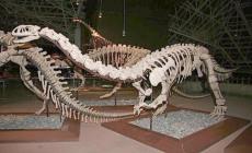 2019年有谁可以收恐龙化石
