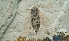 昆虫化石收购行情如何