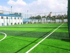 博纳人造足球场草坪