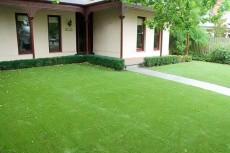 博纳优质休闲草坪