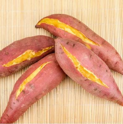 湛江特产西瓜红红薯 西瓜红蜜薯