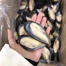 粗加工冷冻水产品智利蓝口贝海蛎子货源