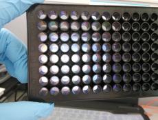 上海百千生物激光共聚焦384孔玻璃底培养板