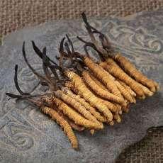 兰州地区专业回收虫草烟酒兰州回收虫草价格