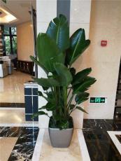 重庆办公室植物租摆重庆写字楼植物租摆