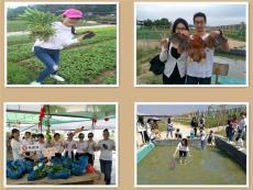 深圳附近较好玩的南山农家乐野炊团建活动