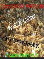 小龙虾?#32622;?#25209;发小龙虾养殖技术稻田如何养殖