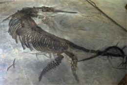 鱼龙化石拍卖价位是多少