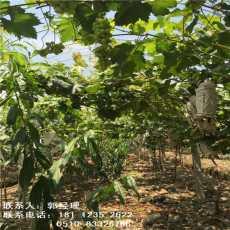 武汉香菇水果大棚管价格合理欢迎您